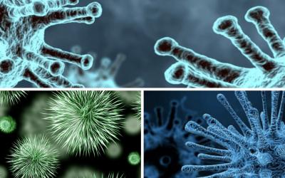 Virus, coronavirus y bacterias: parecen lo mismo, pero no lo son