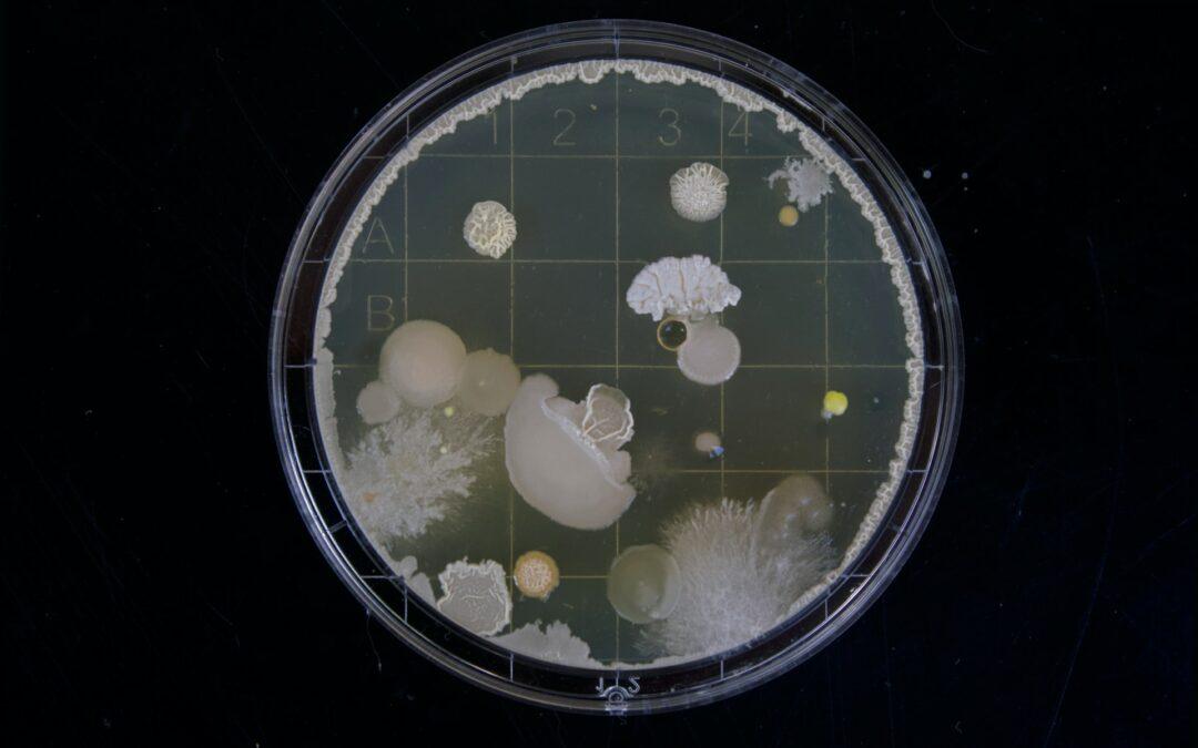 Análisis y tratamientos eficaces contra microorganismos patógenos
